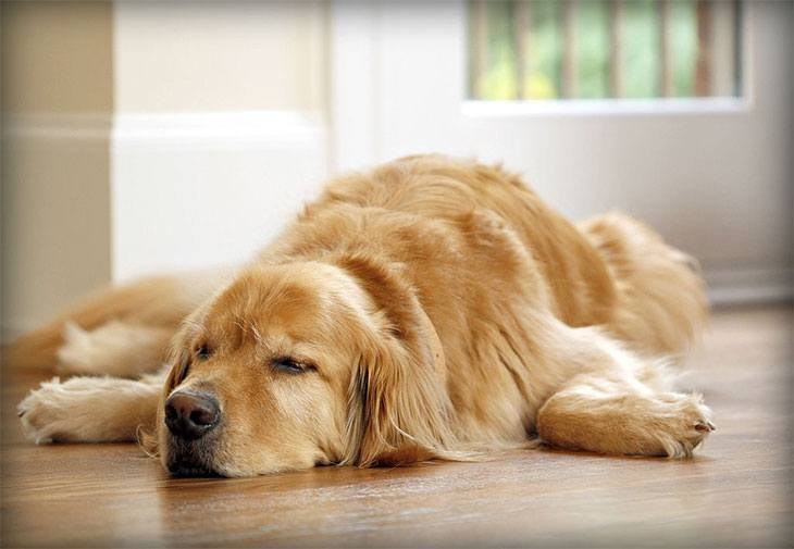 dog food for hypothyroidism in dogs