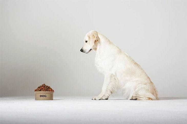 best dog food for a shedding dog