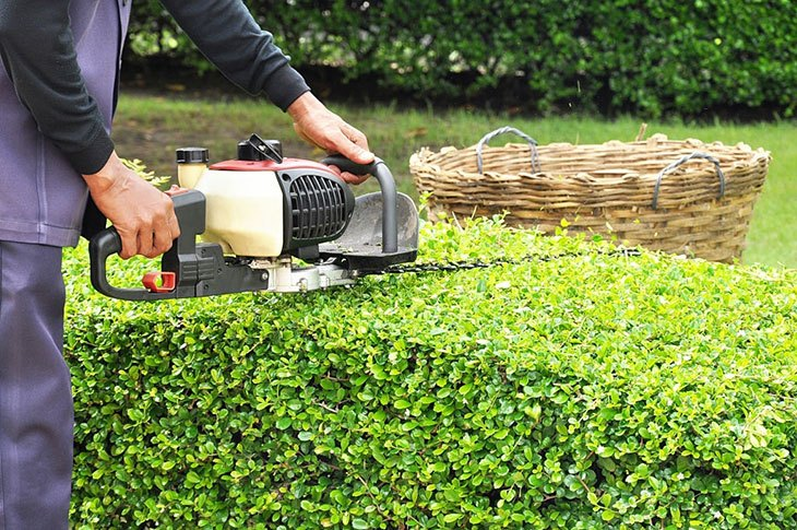 best electric hedge trimmers 2020